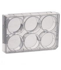 Culture multiwell plates, treated, sterile